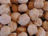 Семена нута Зехавит, Иордан - фото 1