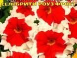 """Семена овощей и цветов ОПТом ТМ""""Май"""" от 0,60 грн - фото 2"""
