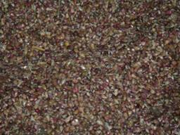 Семена озимого чеснока сорта Украинской и зарубежной селекци