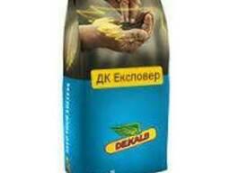 Семена озимого рапса ДК Эксповер (ДК Експовер)