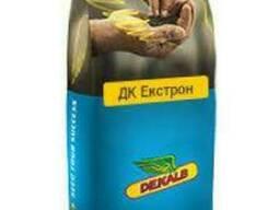 Семена озимого рапса ДК Экстрон (ДК Екстрон)