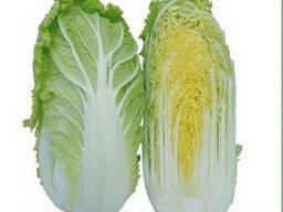 Семена пекинской капусты KS 399 F1 (Китано) - photo 1