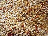Семена перца чили - фото 1