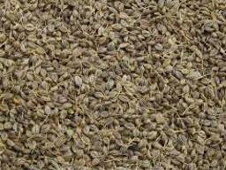 Семена петрушки листовая Карнавал 1кг