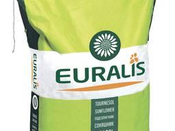 Семена подсолнечника Белла компании Евралис