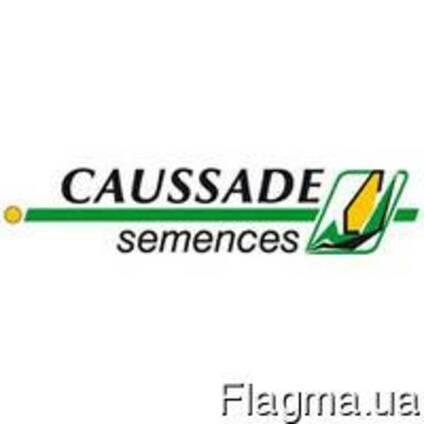 """Насіння соняшника """"Caussade semences"""" - Гібрид Шаркс"""