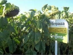 Семена подсолнечника Эстрада (Syngenta)