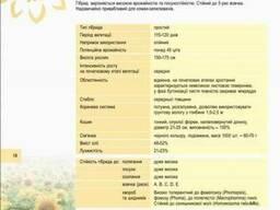 Семена подсолнечника Феликс, Подсолнух Феликс Цена