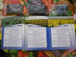 Семена подсолнечника гибрид F1. Насiння соняшника гiбрид F1