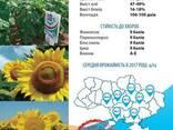 Семена подсолнечника НС Х 2652 (Гранстар) - photo 3