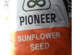 Семена подсолнечника П64ЛЕ25 Пионер (Гранстар)