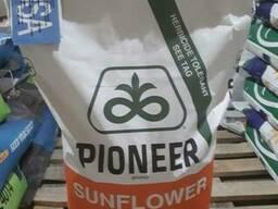Семена Подсолнечника Пионер П64ЛЕ119 (Гранстар)