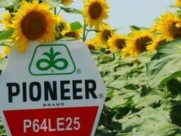 Семена подсолнечника Пионер P64LE25