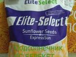 Семена подсолнечника под Евролайтинг ЕС Берекет - photo 2