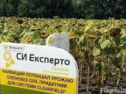 Семена подсолнечника под евролайтинг СИ Эксперто