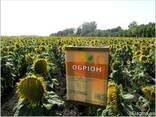 Семена подсолнечника под гербицид Експресс, Евро-Лайтинг. - photo 2