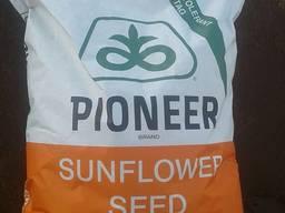 Семена подсолнечника под гранстар Пионер 99