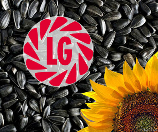 Семена подсолнечника производителя «Лимагрейн»