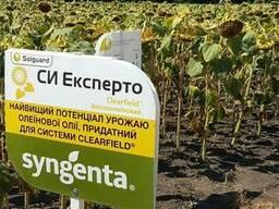 Семена подсолнечника СИ Эксперто (Syngenta)