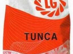 Семена подсолнечника Тунка от производителя Лимагрейн