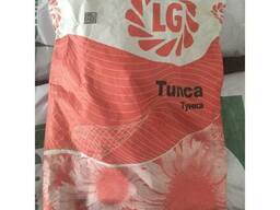 Семена подсолнечника Тунка / Tunca limagrain (лимагрейн)