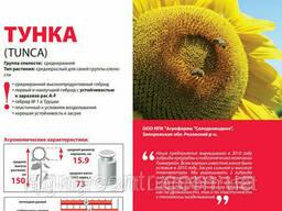 Семена подсолнечника Тунка устойчивый к A-G расам заразихи