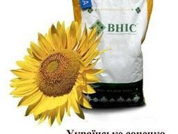 Семена подсолнечника Украинское солнышко