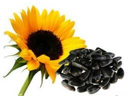 Семена подсолнечника Златсон