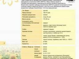 Семена Подсолнуха купить, НС-Х-496 цена, НС-Х-496 купить