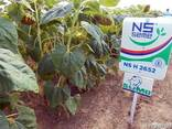 Семена подсолнуха НС Х 2652 Экстра (3,0-3,6мм) - фото 3