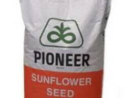 Семена подсолнуха П64ЛЕ99 (P64LE99)