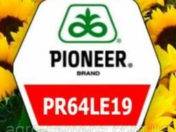 Семена подсолнуха Пионер П64ЛЕ19