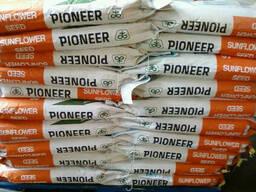 Семена подсолнуха Пионер П64ЛЕ99
