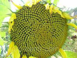 Семена подсолнуха Смеш под Гранстар