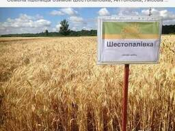 Семена пшеницы Шестопаловка
