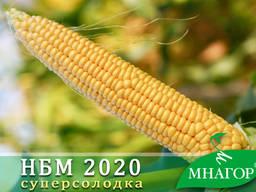 Семена сахарной кукурузы НБМ 2020, среднеспелая (75-78 дней)