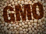 Семена сои трансгенный сорт Kansas ГМО - фото 1