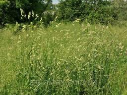 Семена трава грястиця ежа сборная фасовка 20 кг
