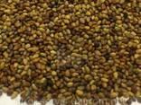 Семена травы Клевер Красный - фото 2