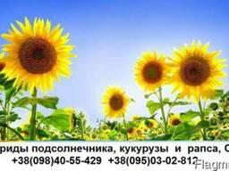 Семена Тунка, Брио, Неома, ПР64Е71, ПР63А90, дкс2960, дк315