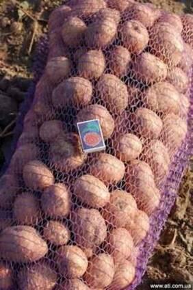 Семенной Картофель от производителя