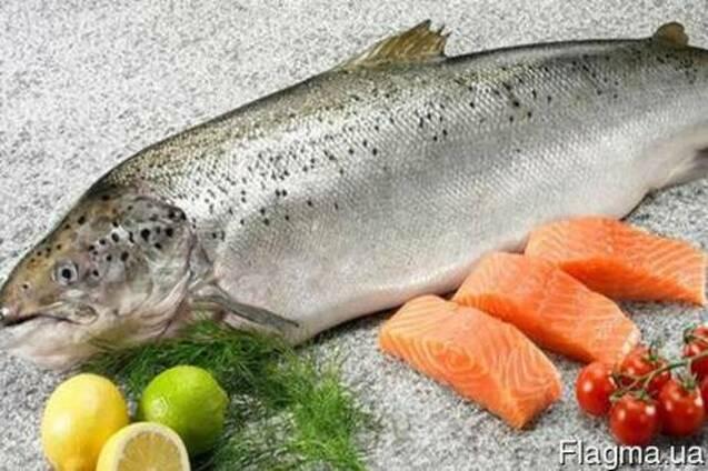 Семга, лосось, форель