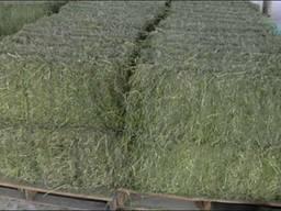 Сено зеленое в тюках по области с доставкой Переяслав Хмель