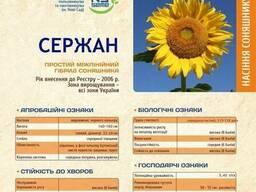 Сержан устойчивый к болезням гибрид Сербия