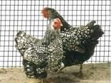 Сетка для ограждения сельского хозяйства - фото 1