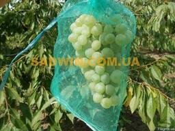 Сетка для зачиты винограда от ос и птиц. Румыния