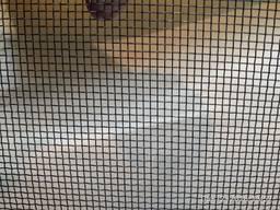 Сетка стальная тканная 1,0*01,0*0,25мм ( ТОРГ)