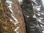 Шелковица сушеная Белая, 100 кг. - фото 2