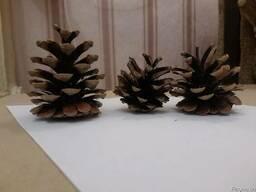 Шишки сосновые купить отборные крупные сухие для декора