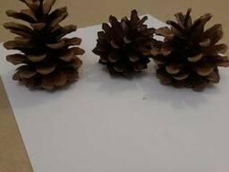 Шишки сосновые купить отборные крупные сухие для декора - фото 2